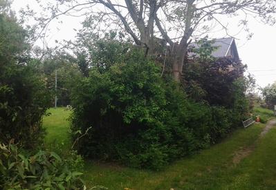 Vellen van struiken/bomen